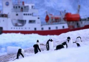 525 antarctic dream expedition 300x209 Photos